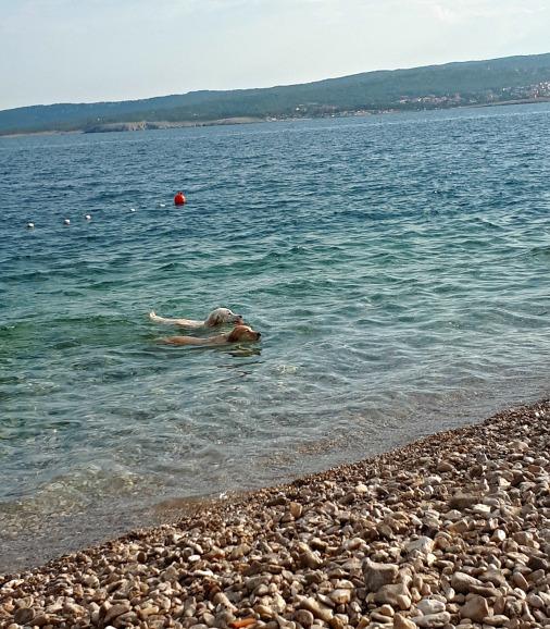 Odrasli psi su dosadni, pristojno plivaju i sve fino,